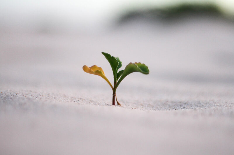 spotbite-growth